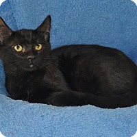 Adopt A Pet :: Spooky - Mesa, AZ