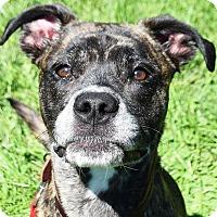 Adopt A Pet :: Lex - Huntley, IL