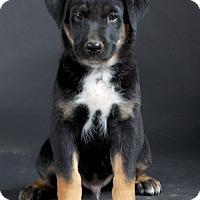 Adopt A Pet :: JJ - Nuevo, CA