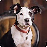 Adopt A Pet :: Jersey - Portland, OR