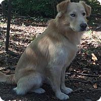Adopt A Pet :: Cody - Brattleboro, VT