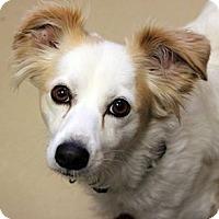 Adopt A Pet :: ALFIE - Hurricane, UT