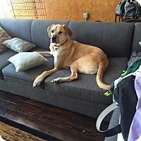 Adopt A Pet :: Ryan - Baden, PA