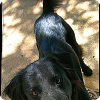 Adopt A Pet :: Deetz - Johnson City, TX
