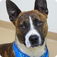 Adopt A Pet :: Tex - Dublin, CA