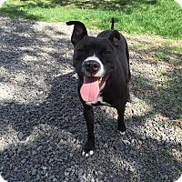 Adopt A Pet :: GiGi - Bend, OR