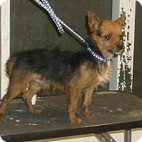 Adopt A Pet :: Rome - Bonifay, FL
