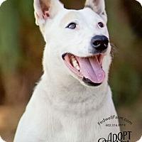 Adopt A Pet :: Drama - Scottsdale, AZ