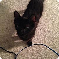Adopt A Pet :: Mark - Elyria, OH