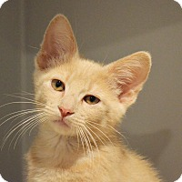 Adopt A Pet :: Tympani - Lincoln, NE