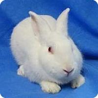 Adopt A Pet :: Pedro - Woburn, MA
