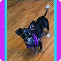 Adopt A Pet :: Roxy (Emotional Support) - Genoa City, WI