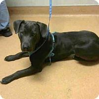 Adopt A Pet :: MAJOR - Martinez, CA