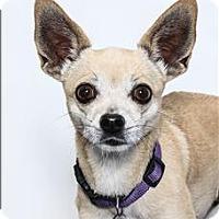 Adopt A Pet :: Rackets - San Luis Obispo, CA