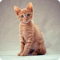 Adopt A Pet :: Saturn- - Arlington, VA