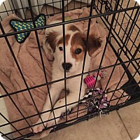 Adopt A Pet :: Annie - Longview, TX