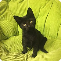 Adopt A Pet :: Skittles - Sterling Heights, MI