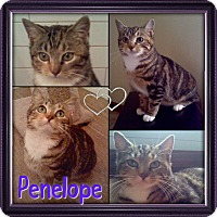 Adopt A Pet :: Penelope - Jeffersonville, IN