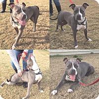 Adopt A Pet :: Cali - Lompoc, CA
