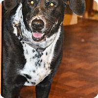 Adopt A Pet :: Cleo - Melrose, FL