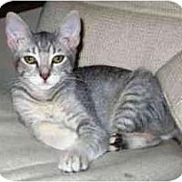 Adopt A Pet :: Cupcake - Davis, CA