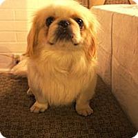 Adopt A Pet :: Sawyer - Toluca Lake, CA