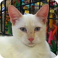 Adopt A Pet :: Silver - Modesto, CA
