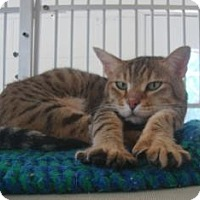 Adopt A Pet :: Mei Lei - Winter Haven, FL