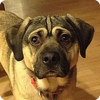 Adopt A Pet :: Junior - Gig Harbor, WA