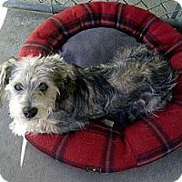 Adopt A Pet :: Fredo - Milan, NY