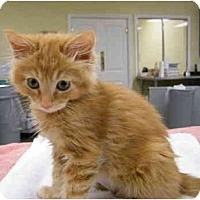Adopt A Pet :: Nutmeg - Modesto, CA