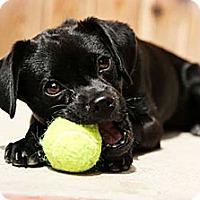Adopt A Pet :: Bugsy - Santa Barbara, CA