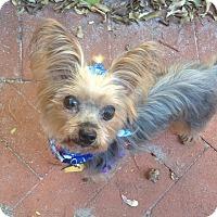 Adopt A Pet :: Bodhi - West Palm Beach, FL