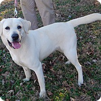 Adopt A Pet :: *Echo - PENDING - Westport, CT