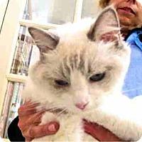 Adopt A Pet :: Baby Blue - Davis, CA