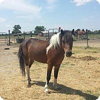 Adopt A Pet :: Rebel - Farmersville, TX