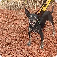 Adopt A Pet :: Pappy - Yuba City, CA