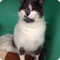 Adopt A Pet :: Lil Dude - Seahurst, WA