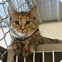 Adopt A Pet :: Stacy - Geneseo, IL