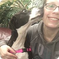Adopt A Pet :: Mossie - Milford, CT
