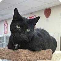 Adopt A Pet :: Skylar - Massapequa, NY
