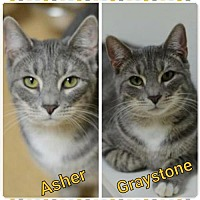 Adopt A Pet :: Asher 150735 - Atlanta, GA