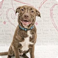 Adopt A Pet :: Charlie - West Allis, WI