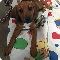 Adopt A Pet :: Blaze - Russellville, KY