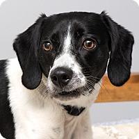 Adopt A Pet :: Wrangler - Westfield, NY