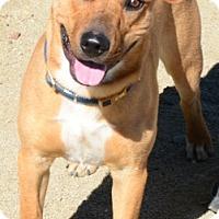 Adopt A Pet :: Grainger - Gardnerville, NV