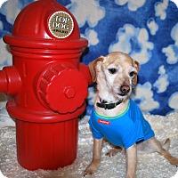 Adopt A Pet :: Blitzen - Waupaca, WI