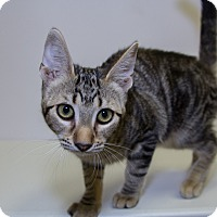 Adopt A Pet :: Tyga - Mission Viejo, CA