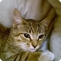 Adopt A Pet :: S A L L Y - Brea, CA