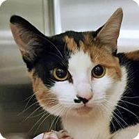 Adopt A Pet :: Tiara - Prescott, AZ